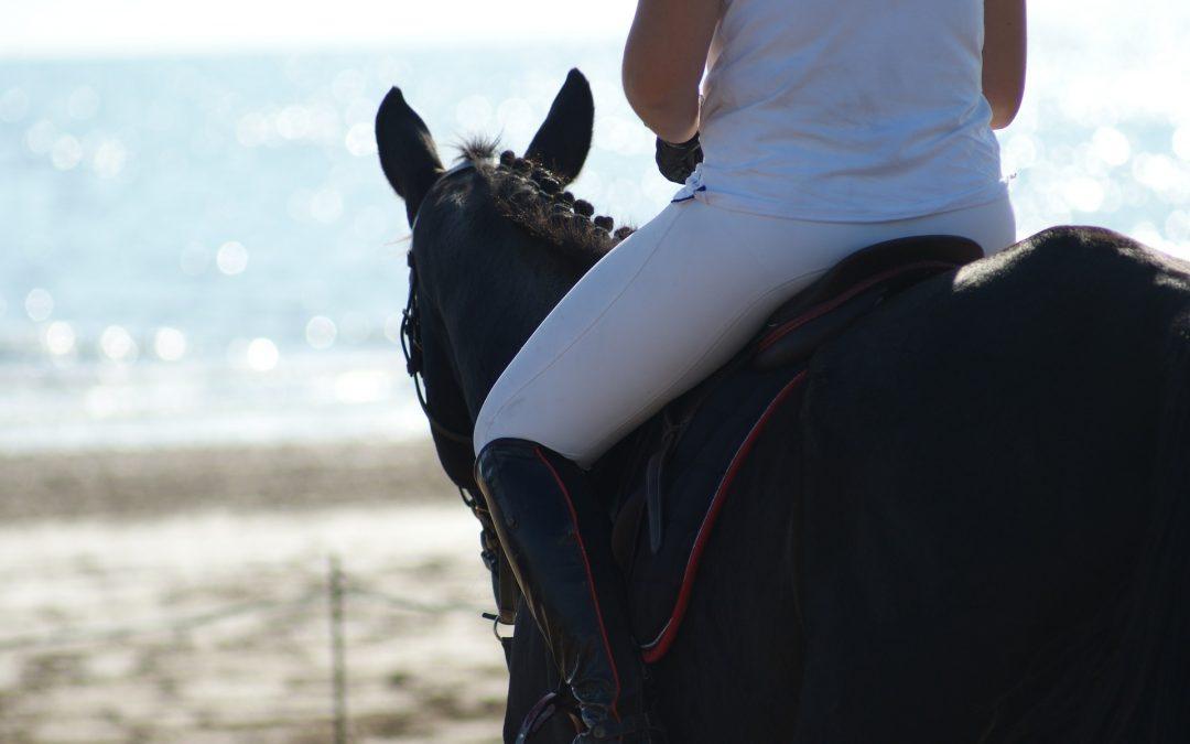 Pferd + Reiter Team