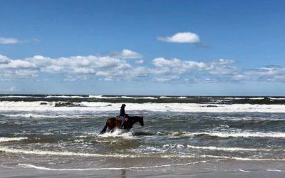 Das Pferd am Meer